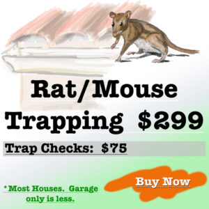 Rodent trapping service
